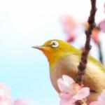 ハノイ歳時記-春-